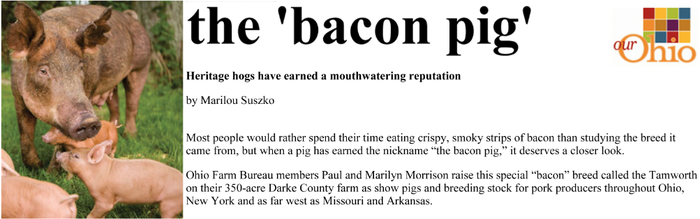 "Tamworth: The Bacon Pig — ""Our Ohio"" Magazine Story (Part 1)"