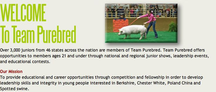 Over 3,000 juniors from 46 states across the nation are members of Team Purebred. Team Purebred offers opportunities to members ages 21 and under through national and regional junior shows, leadership events, and educational contests.