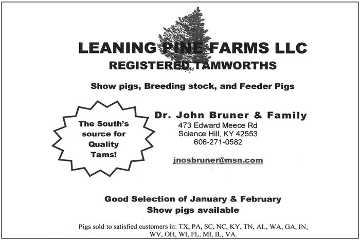 Leaning Pine Farms LLC — Tamworths — Science Hill, Kentucky