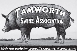TAMWORTH SWINE ASSOCIATION - OFFICIAL WEBSITE - www.TamworthSwine.org