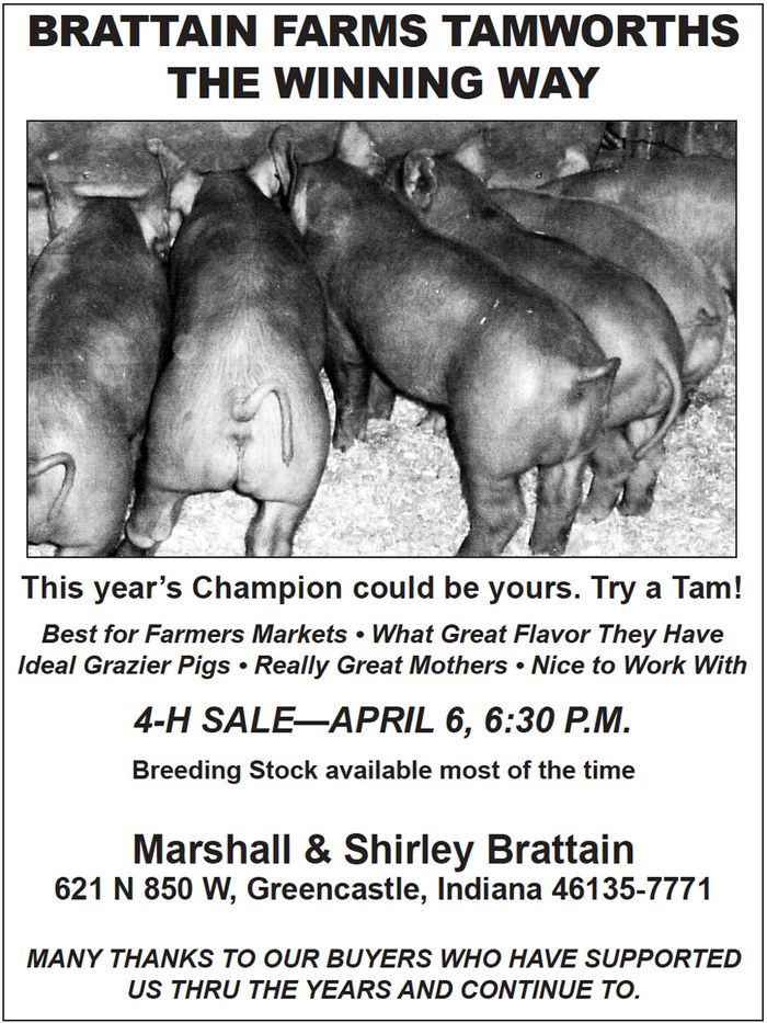Brattain Farms Tamworths — Shirley Brattain - Greencastle, Indiana